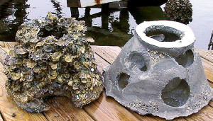 ComparisonOysters