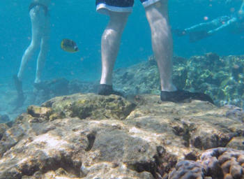 reef ball foundation protecting the reefs we still have
